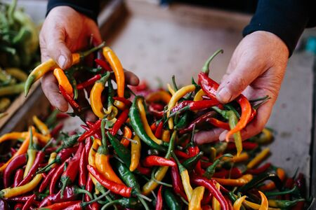 a colorful mix of the freshest and hottest chili peppers. Hot peppers in farmers hands