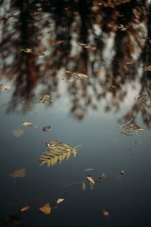 Fallen autumn leaves in water and rainy weather. Fall time