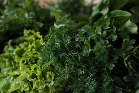 Closeup of fresh herbs. Parsley and dill, spinach, salad Stok Fotoğraf - 145312641