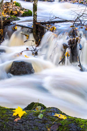 the rapids: Rapids in the fall