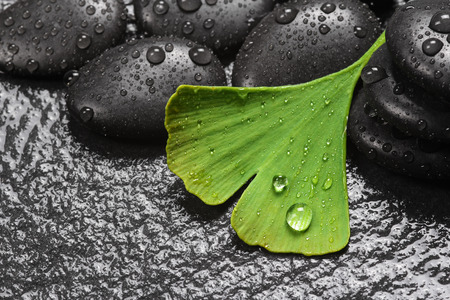 Homeopathy with ginkgo and hot stones photo