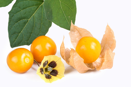 physalis: Physalis, fresh fruits with blossom Stock Photo
