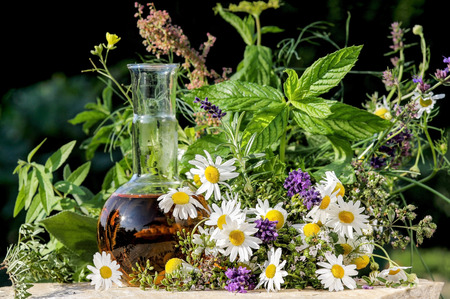 naturopathy: Fresh herbs and medical plants