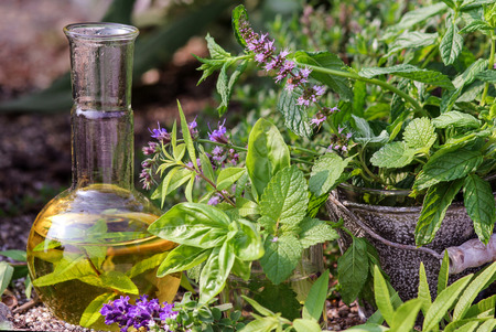 essential oil: Cooking and homeopathy with medical plants