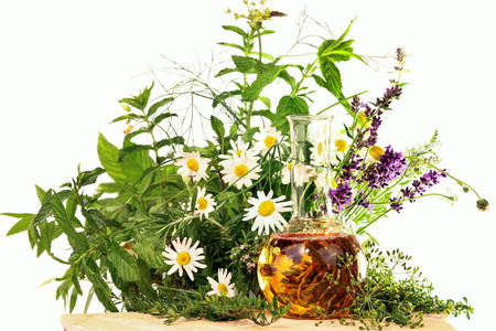 Essence with medical plants and fresh herbs photo