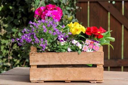 色の鉢植え 写真素材