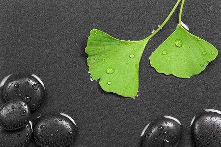 holistic therapy: Ginkgo leafs and hot stones