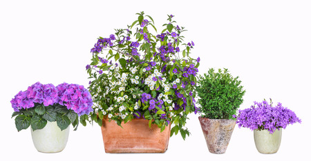 gentian flower: Different flower pots Stock Photo