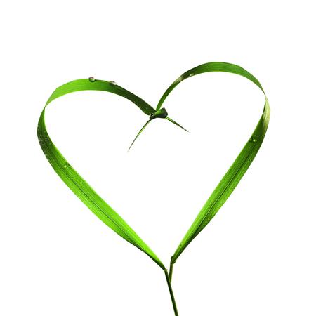 grass blades: Heart with blades of grass, ecology