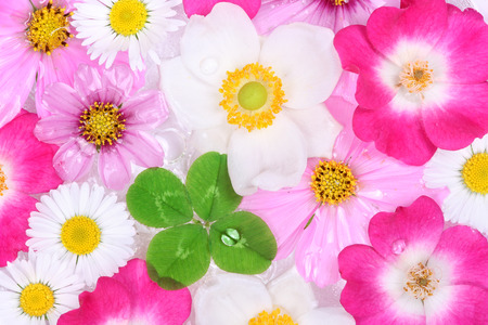 Four-leaf clover with flower background photo