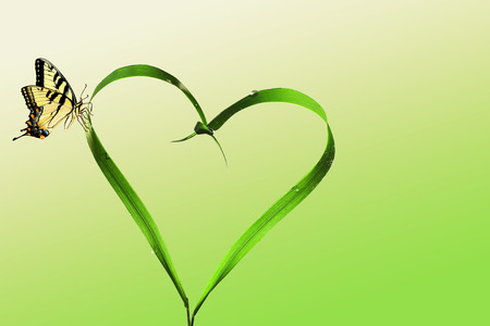 grass blades: Heart, blades of grass and butterfly Stock Photo