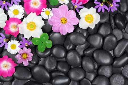 Background with stones and flowers photo