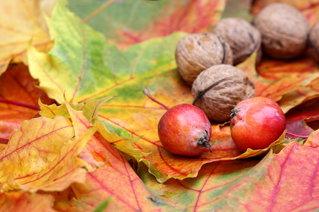 Foliage with walnuts and little apples photo