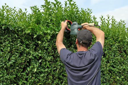 bush trimming: Worker is cutting a hedge
