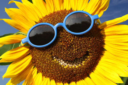 green smiley face: Smiling sunflower Stock Photo