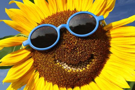 smiley: Smiling sunflower Stock Photo