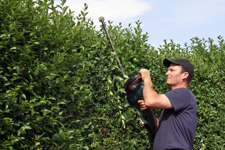 Clip a hedge, gardening