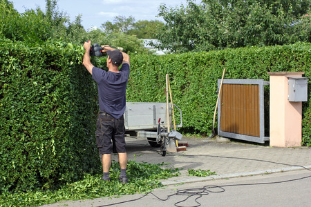 A man is cutting a hedge