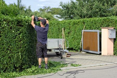 paysagiste: Un homme découpe une haie Banque d'images