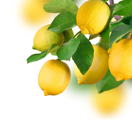 arboleda: Limón montón, aislado Foto de archivo