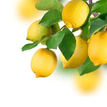 Mazzo di limone, isolato Archivio Fotografico - 36571763