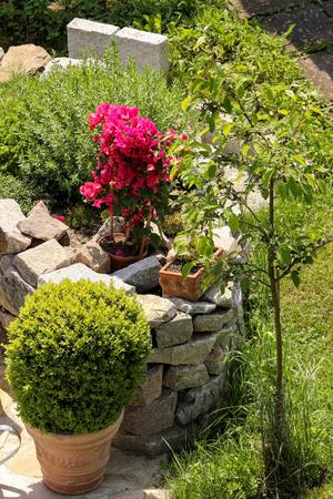 paysagiste: Herb jardin, rocaille Banque d'images