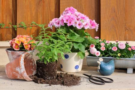 Gardening in springtime photo