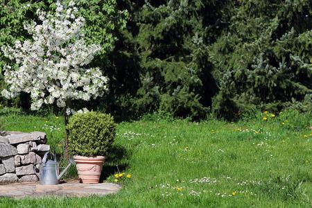 paysagiste: Blooming pommier dans le jardin