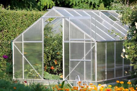 aire acondicionado: Invernadero con plantas de tomate Foto de archivo
