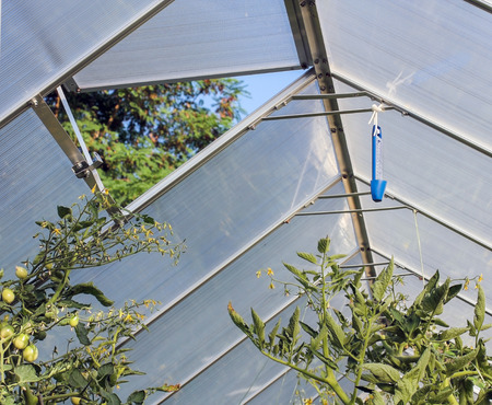 roofed house: Greenhouse window, tomato plants Stock Photo
