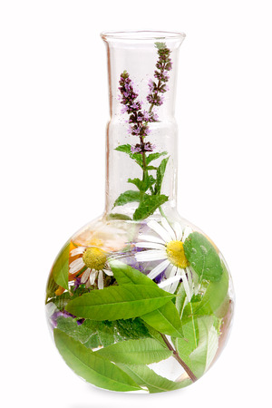 botanical remedy: Flat bottom flask with medical herbs