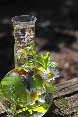 homeopathy: Healthy with Homeopathy