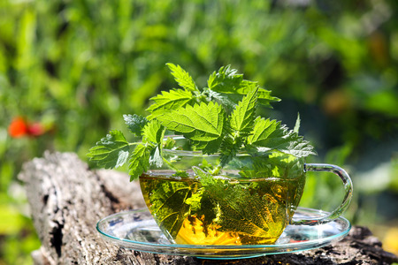 stinging  nettle: Teacup with fresh stinging nettle tea