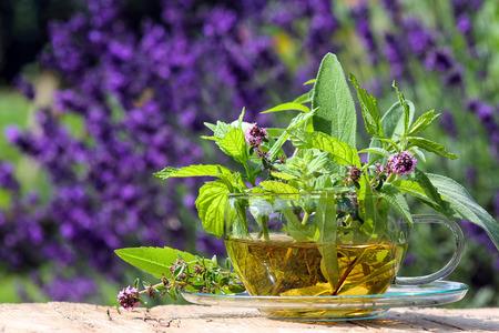 Teacup con erbe curative fresche