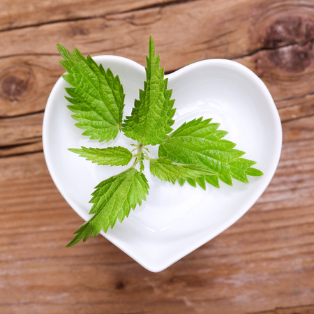stinging: Homeopathy and cooking with stinging nettle