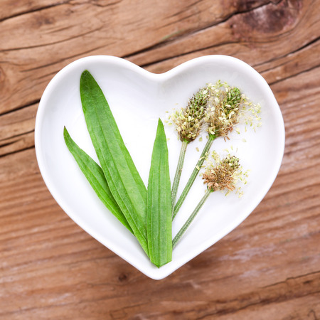 Homeopathy and cooking with ribwort plantain