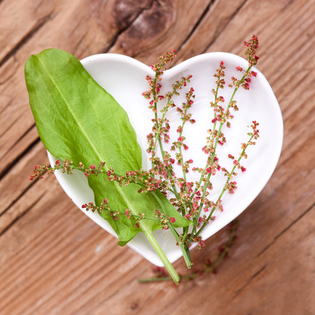 sorrel: Homeopathy and cooking with sorrel Stock Photo