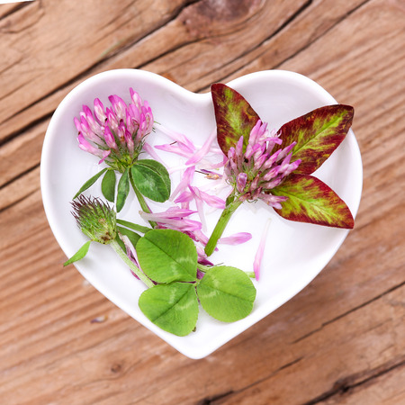 red clover: Homeopathy and cooking with red clover