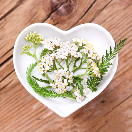 yarrow: Homeopathy and cooking with silver yarrow