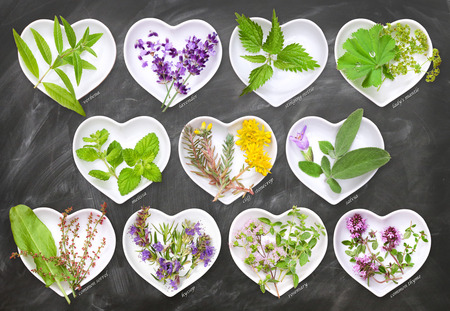 Cooking and homeopathy with fresh herbs Stock Photo