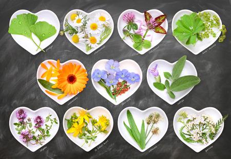 lady's mantle: Alternative Medicine with medicinal plants 1
