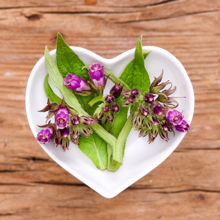 Homeopathy and cooking with comfrey Stockfoto