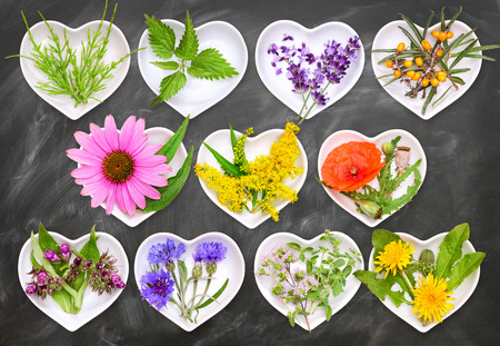 Alternative Medicine with medicinal plants 2 Stock Photo
