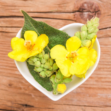 Homeopathy and cooking with mullein