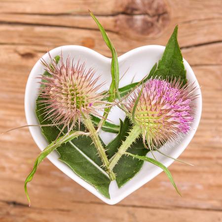 homeopatía: La homeopatía y cocinar con cardón