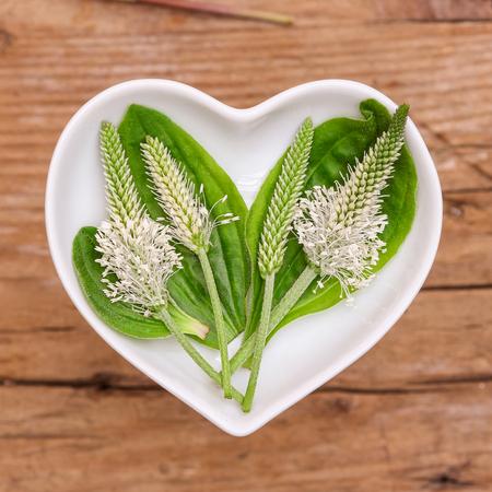 Homöopathie und das Kochen mit Wegerich