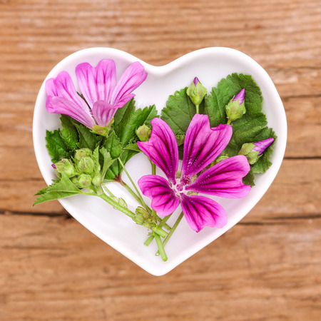 mallow: Homeopathy and cooking with mallow Stock Photo