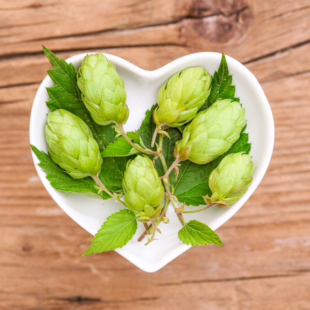 common hop: Homeopathy and cooking with hops