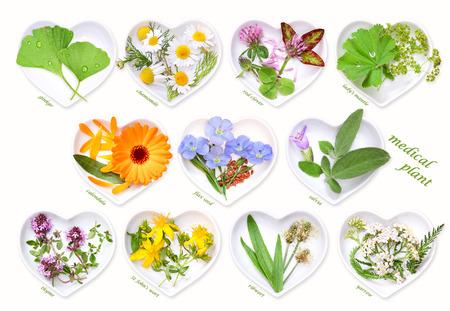 Alternative Medicine with medicinal plants 1