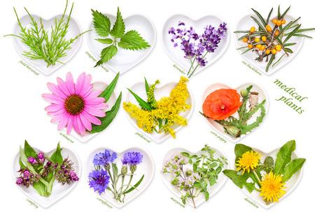 Alternative Medicine with medicinal plants 2 Stock Photo